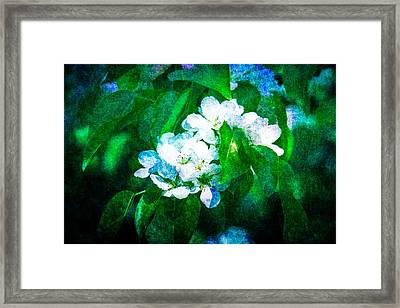 The Art Of Blossoming Framed Print by Alexander Senin