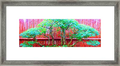 The Art Of Bonsai Framed Print by Ann Johndro-Collins