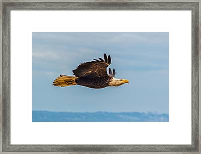 The Art Of Flight Framed Print by Ian Stotesbury