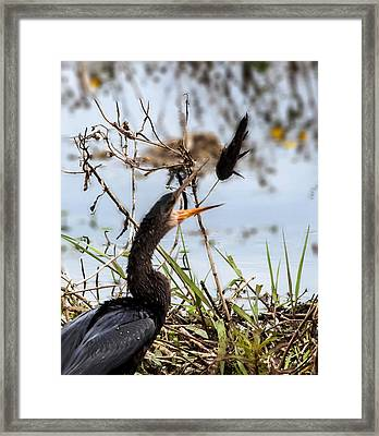 The Art Of Juggling Framed Print by Norman Johnson
