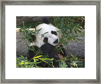 The Art Of Posing At Breakfast Framed Print