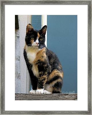 The Art Of Watching Framed Print
