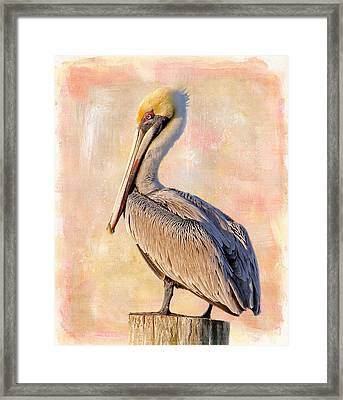 Birds - The Artful Pelican Framed Print