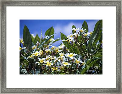 The Ascetic Dimension Framed Print by Sharon Mau