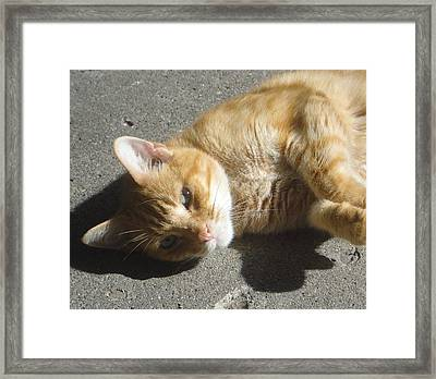 The Attention Of Ischy Framed Print by Guy Ricketts