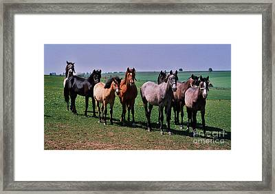 The Audience Framed Print by Angel  Tarantella