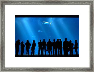 The Audience Framed Print by Luis Esteves