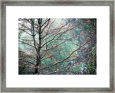 The Aura Of Trees Framed Print by Angela Davies