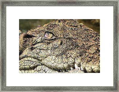 The Aussie Framed Print by JC Findley