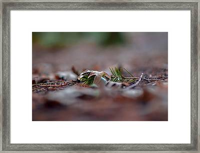 The Autumn Leaves Framed Print by Georgina Noronha