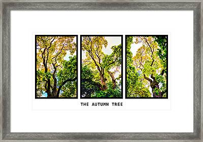 The Autumn Tree Framed Print by Tommytechno Sweden