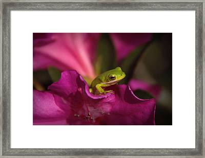 The Azalea Bed Framed Print