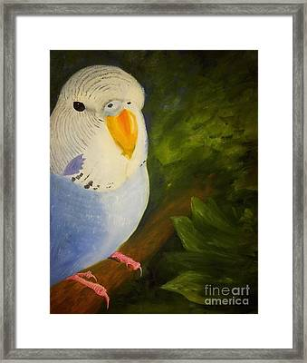 The Baby Parakeet - Budgie Framed Print