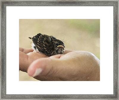Framed Print featuring the photograph The Baby Wren Can't Fly by B Wayne Mullins