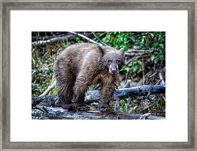 Framed Print featuring the photograph The Balance Beam by Jim Thompson