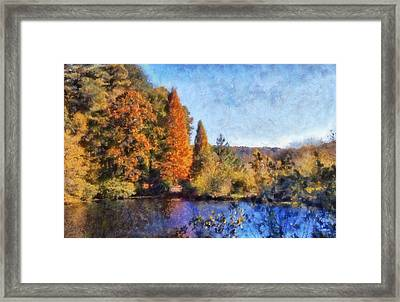 The Bald Cypress Framed Print by Daniel Eskridge