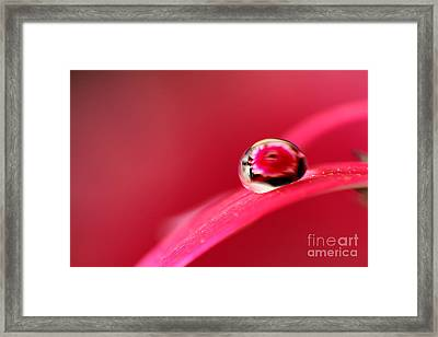 The Ball Framed Print by Eden Baed