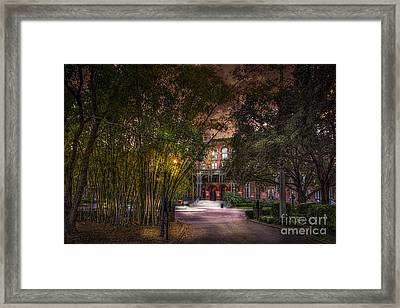 The Bamboo Path Framed Print