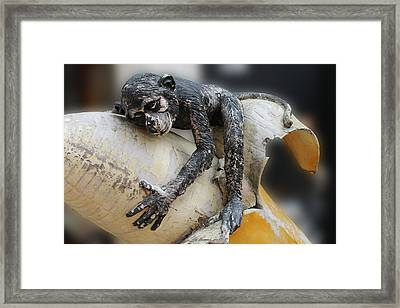 The Banana Dream Framed Print by Steve K