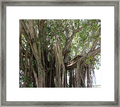 The Banyan Tree Framed Print by Megan Dirsa-DuBois