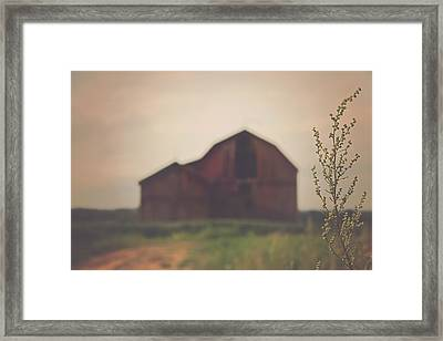 The Barn Daylight Version Framed Print by Carrie Ann Grippo-Pike