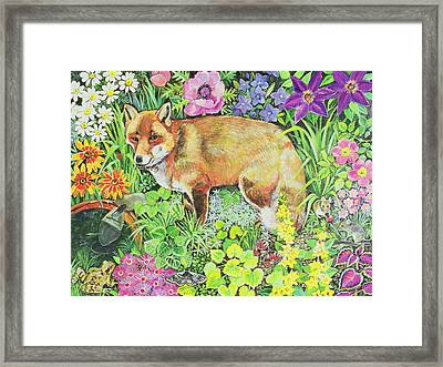 The Barnet Fox Framed Print