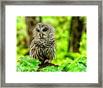 The Barred Owl Framed Print by Louis Dallara