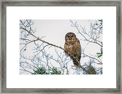 Framed Print featuring the photograph The Barred Owl by Phil Stone