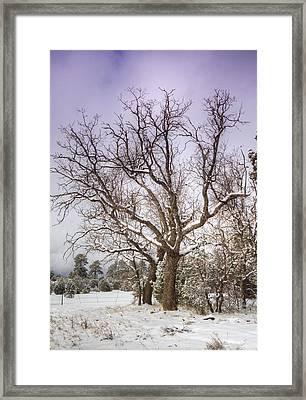 The Barren Tree  Framed Print