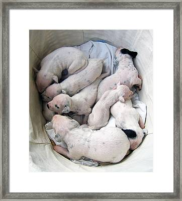 The  Basket Of Puppies Framed Print by Kyra Belan
