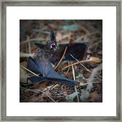 The Bat Painterly Framed Print by Ernie Echols