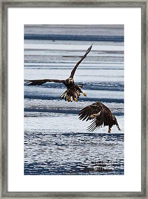 The Battle Framed Print by Chris Heitstuman