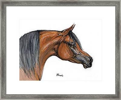 The Bay Arabian Horse 18 Framed Print by Angel  Tarantella