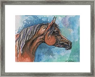 The Bay Arabian Horse 21 Framed Print by Angel  Tarantella