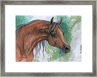The Bay Arabian Horse 6 Framed Print by Angel  Tarantella
