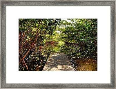 The Bayou Framed Print by Mal Bray