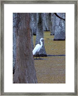 Framed Print featuring the photograph The Bayou's White Knight by John Glass