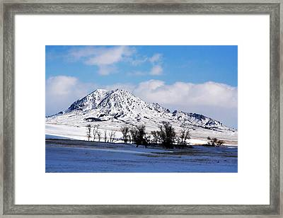 The Bear Framed Print