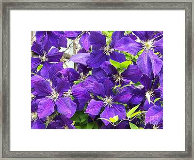 The Beauties Framed Print