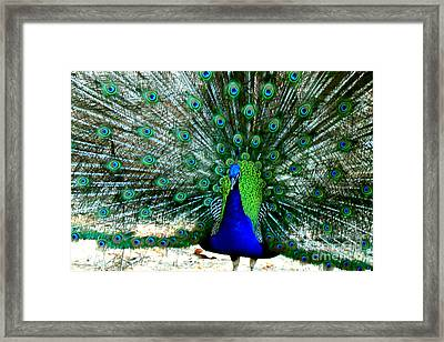 Framed Print featuring the photograph The Beautiful Plumage by Kathy  White