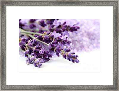 The Beautiful Purple Flower Framed Print