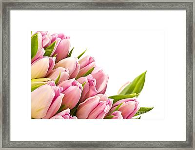 The Beautiful Purple Tulips Framed Print