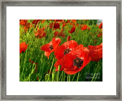 The Beautiful Red Poppies Framed Print by Boon Mee