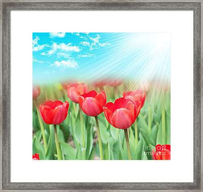The Beautiful Summer Flowers Framed Print by Boon Mee