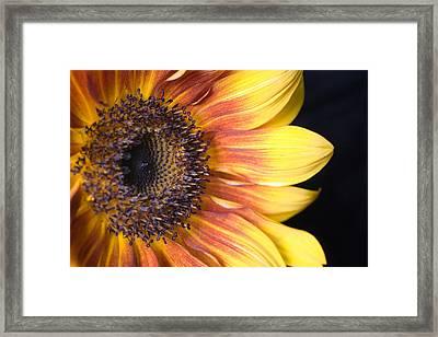 The Beautiful Sunflower Framed Print