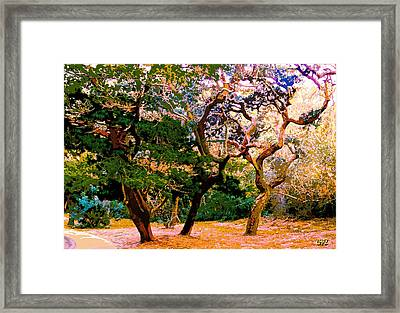 The Beautiful Trees Of Florida Framed Print
