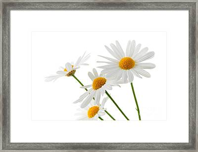 The Beautiful White Flower Framed Print by Boon Mee