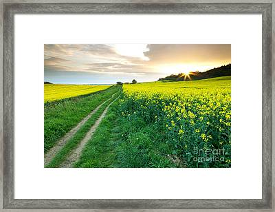 The Beautiful Yellow Rapeseed Field Framed Print by Boon Mee