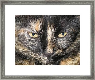 The Beauty Mau Framed Print
