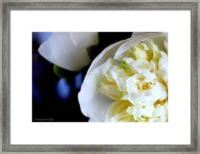 The Beauty Of A Single Flower Framed Print by Mariana Costa Weldon